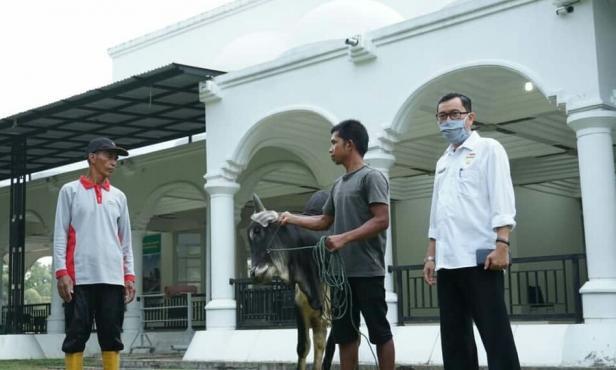 Penyerahan hewan kurban kepada panitia