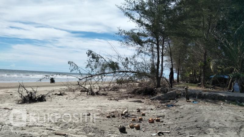 Kondisi Pantai Sambungo pasca dihantam Abrasi