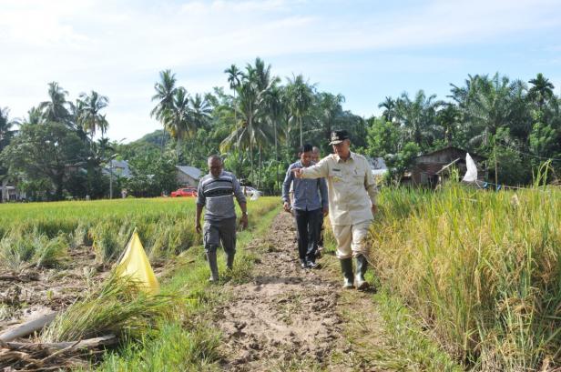 Wagub Sumbar Nasrul Abit meninjau sawah terdampak longsor di Nagari Padang XI Punggasan, Kecamatan Linggo Sari Baganti, Kabupaten Pesisir Selatan