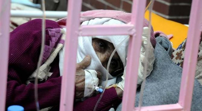 Wabah kolera di Yaman menyebabkan 51 orang meninggal dunia dalam dua minggu