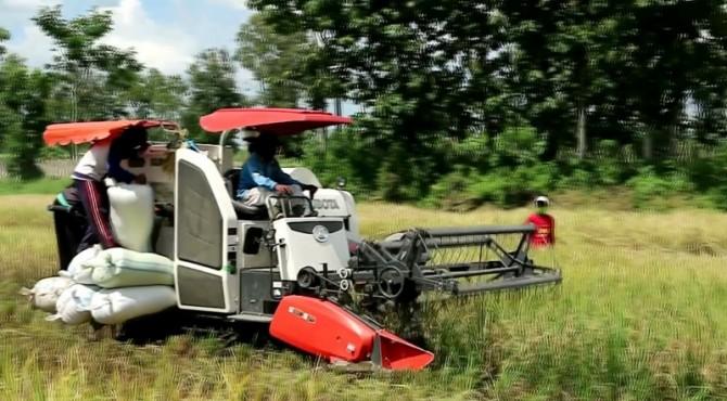 Combine Harvester, salah satu alat dan mesin pertanian yang kerap digunakan petani untuk mempermudah proses panen