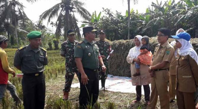 Dandim 0305 Pasaman tengah berdiskusi terkait bulog penyerapan gabah petani saat meninjau pelaksanaan panen Kelompok Tani Toraja di Padang Gelugur, Pasaman