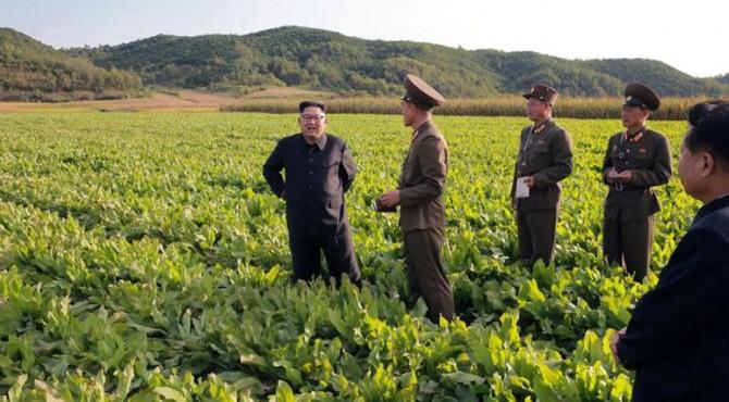 Empat dari 10 warga Korea Utara secara kronis kekurangan makanan dan pemotongan lebih lanjut jatah minimal setelah panen terburuk dalam satu dekade.