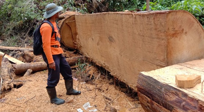 Penemuan kayu siap olah di lokasi di Bukik Harimau Campo di Kawasan Hutan Lindung Gunung Talamau-Pasaman Barat