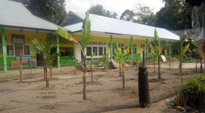 Tanaman pisang yang ditanam di halaman sekolah