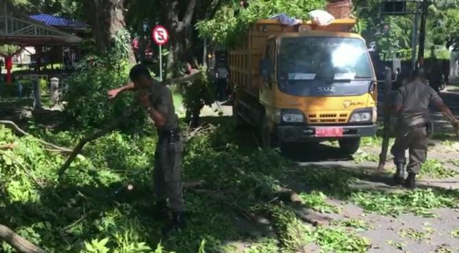 Petugas dari Satpol PP dan BPBD melakukan pembersihan pohon tumbang di Jalan Rasuna Said.