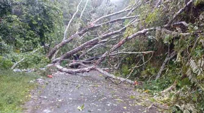 Pohon Tumbang Menutup Akses Jalan Alternatif Matur-Bukittinggi