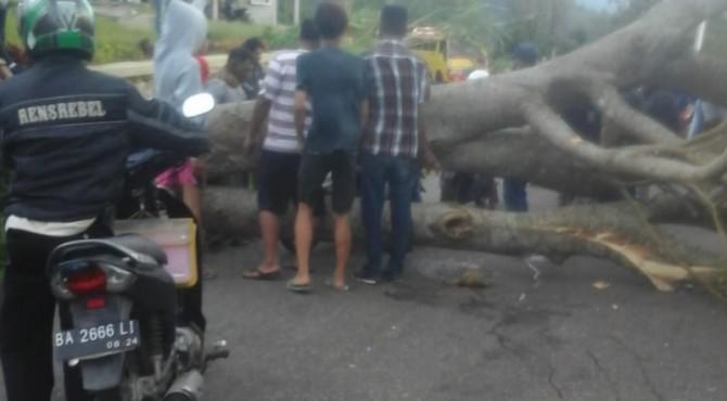 Pohon tumbang tutup jalan di kelok 27