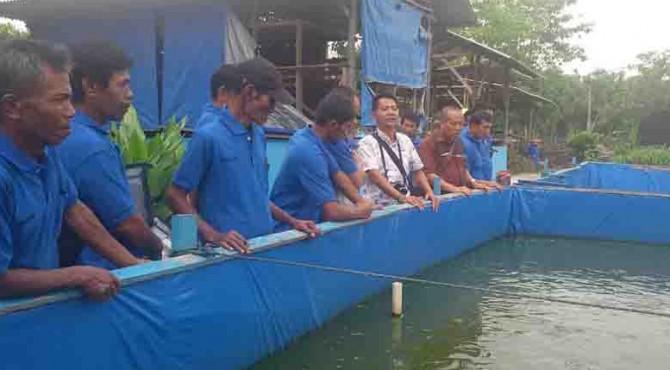Mantan penambang pasir di jalur belt conveyor PT Semen Padang meninjau kolam ikan yang ada di lokasi RTMPE Kampar, Riau