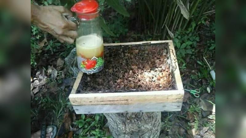 Sarang dan Madu Lebah Tak Bersengat (Galo-galo) di Halaman Rumah Heri di Desa Santur, Kecamatan Barangin, Kota Sawahlunto