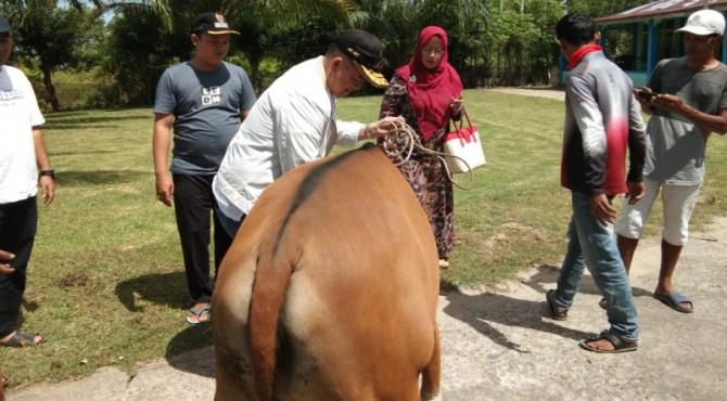 Wagub Sumbar Nasrul Abit menyerahkan sumbangan sapi kurban