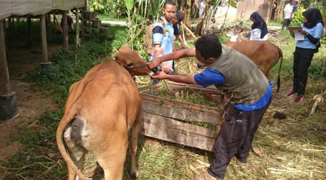 Pemeriksaan hewan oleh UPTD Keswan Payakumbuh.