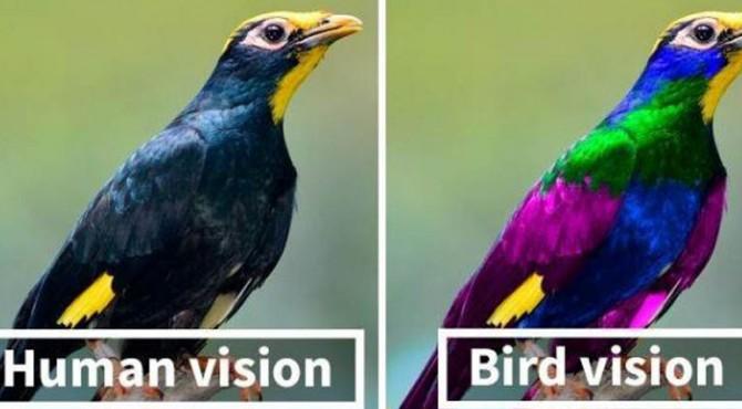 Perbedaan penglihatan manusia dan burung.