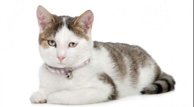 Anda Suka Kucing Ketahui Dulu Karakter 6 Jenis Kucing Ini Klikpositif Com Media Generasi Positif