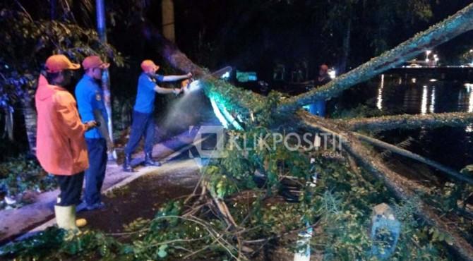 Petugas dari BPBDPK Kota Padang melakukan pemotongan pohon tumbang.