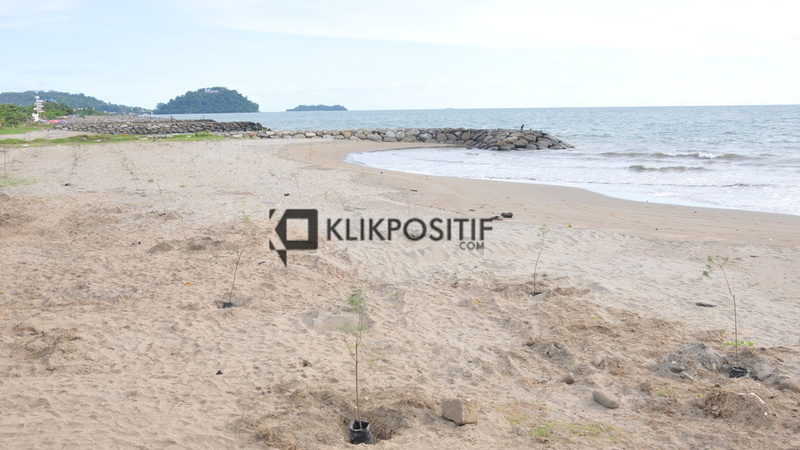 Penaman pohon pelindung di pantai Padang, Kota Padang, Sumatera Barat