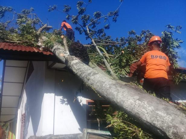 BPBD Agam Tengah Membersihkan Material Pohon