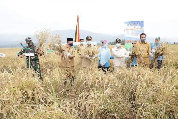 Wagub Sumbar, Nasrul Abit, Dandim 0309/Solok serta Pejabat Pemko Solok panen padi di Sawah Solok