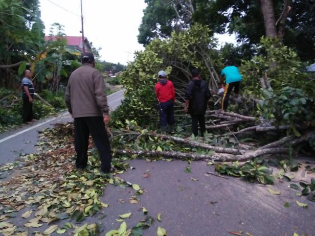 Proses evakuasi pohon tumbang di Payakumbuh.