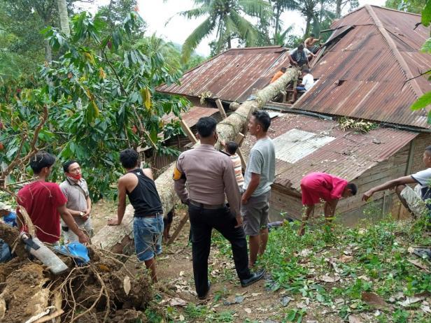 Rumah warga rusak tertimpa pohon di Lima Puluh Kota.