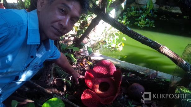 Joni Hartono dan Bunga Rafflesia Arnoldi