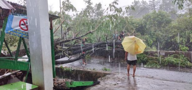 Pohon tumbang di Kecamatan Pauh, Kota Padang
