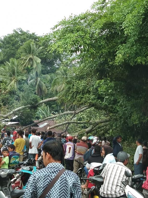 Pohon tumbang akibat badai hambat akses jalan warga di Sutera Pessel beberapa hari lalu