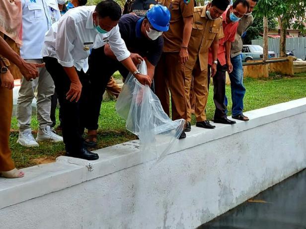 Bupati Pessel, Rusma Yul Anwar saat melepaskan 5 ribu bibit ikan nila di kolam RMB Painan
