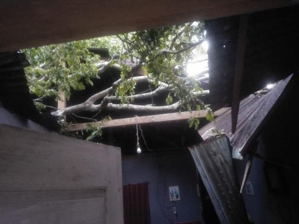 Satu unit rumah yang tertimpa pohon jengkol di IV Nagari Bayang Utara-Pessel