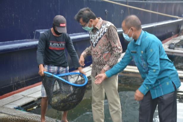 Gubernur Sumbar Irwan Prayitno saat panen ikan kerapu di Kawasan Mandeh Pesisir Selatan