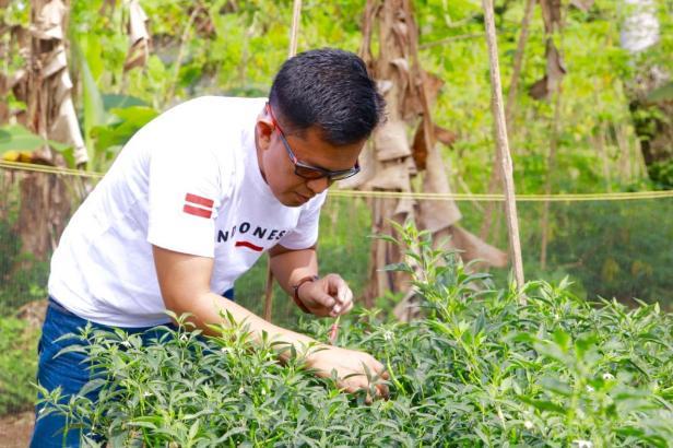 Wakil Wali Kota Payakumbuh, Erwin Yunaz saat melakukan panen cabai bersama Kelompok Tani Komunitas Hijau.