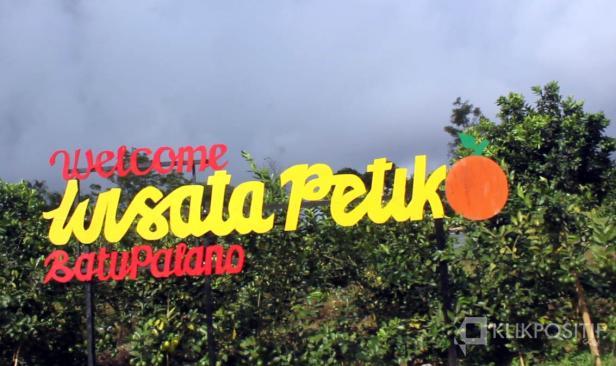 Wisata Petik Jeruk di Batu Palano