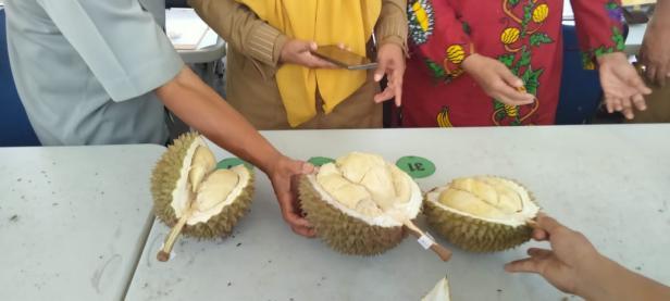 Tiga durian terbaik pada Festival Durian Solok Selatan