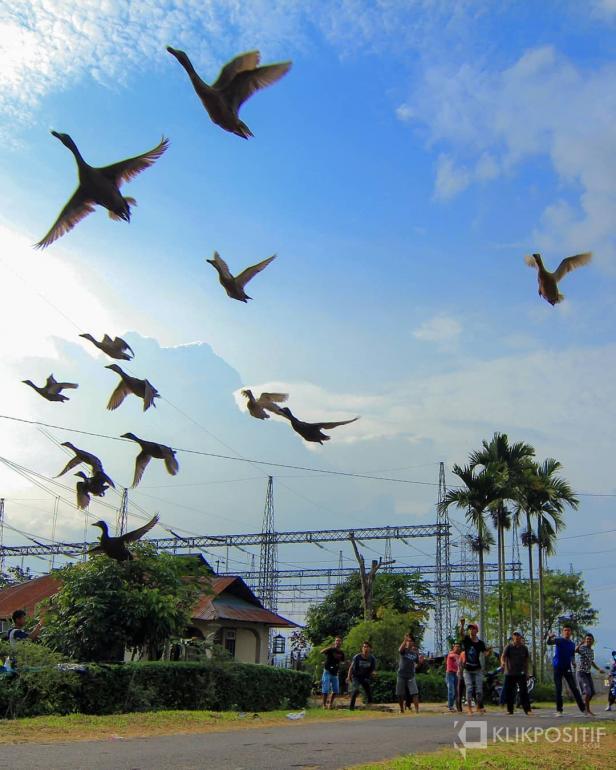 Anak nagari di Payakumbuh saat melakukan aksi terbang itik di salah satu galanggang yang ada di Kota Payakumbuh.