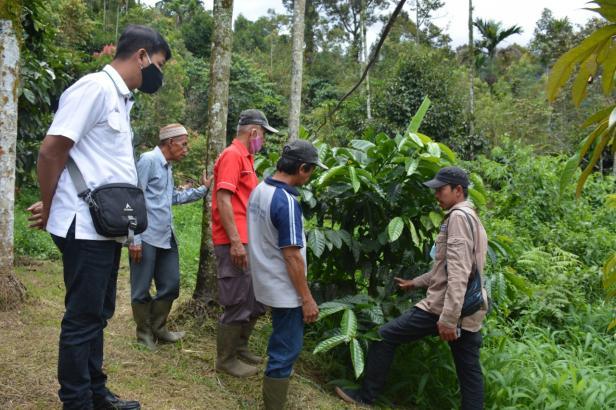 Komunitas Kopi Solok Rajo yang difasilitasi CSR PT Semen Padang ketika meninjau kebun kopi Bancah Sikayan Balumuik baru-baru ini.