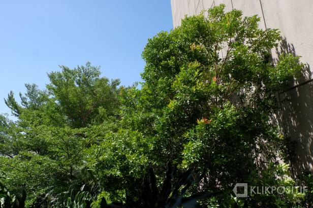 Pohon yang dilanda angin kencang di Padang