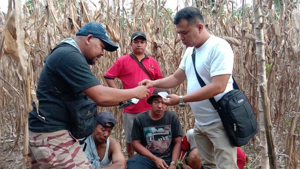 Penangkapan pelaku di TKP ladang jagung