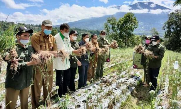 Panen tanaman Bawang Merah di Nagari Pandai Sikek, Kecamatan X Koto Tanah Datar