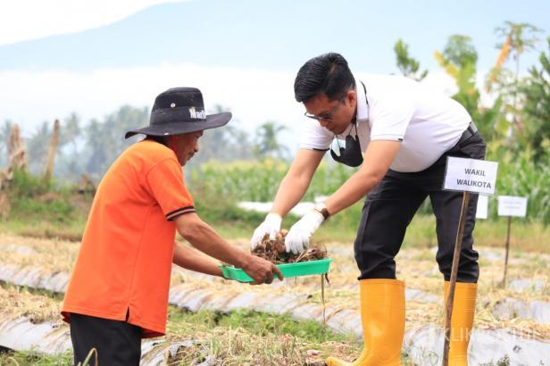Wakil Wali Kota Payakumbuh Erwin Yunaz saat panen bawang di Payolinyam