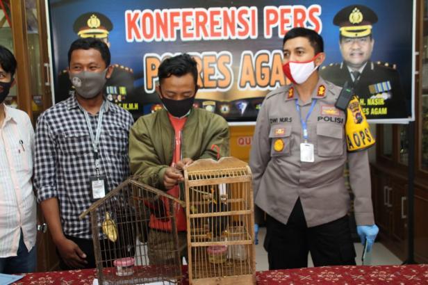 Kapolres Agam AKBP Dwi Nur Setiawa saat press release
