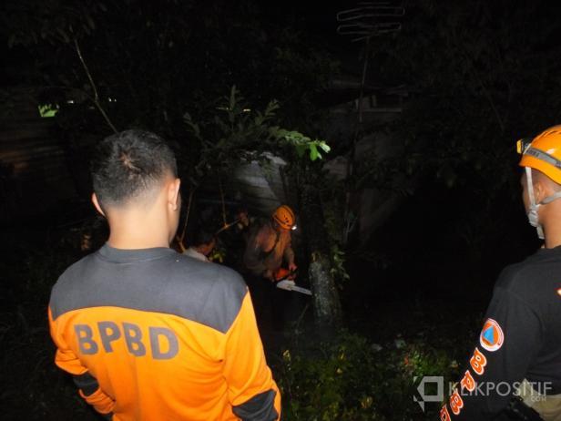 BPBD Bukittinggi Tengah Mengevakuasi Material Pohon