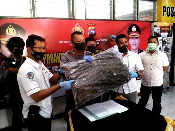 Polisi saat menunjukan barang bukti ganja