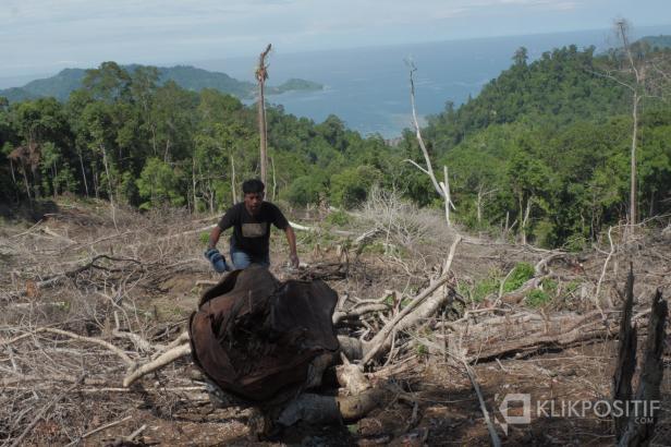 Seorang warga melihat keadaan hutan yang ditebang liar di daerah Bungus Teluk Kabung