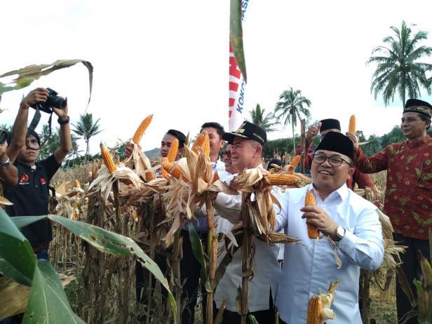 Ketua Umum Mappindo saat panen pertama uji coba penanaman pertanian jagung di Nagari VII Koto Talago, Limapuluh Kota.