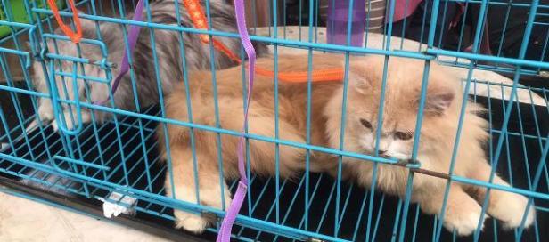 Payokumbuah Cat Fun Festival di Ngalau Indah.