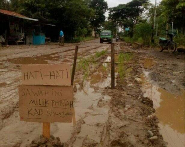 Jalan provinsi ditanami padi oleh masyarakat di Jorong Koto Tuo VII, Kecamatan Koto VII, Kabupaten Sijunjung, Sumatera Barat