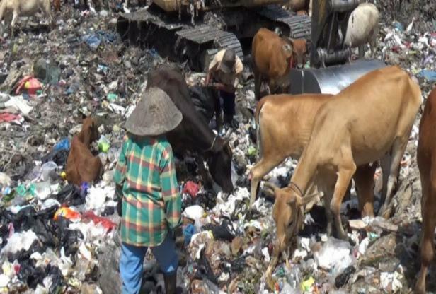 Sampah di TPA Air Dingin