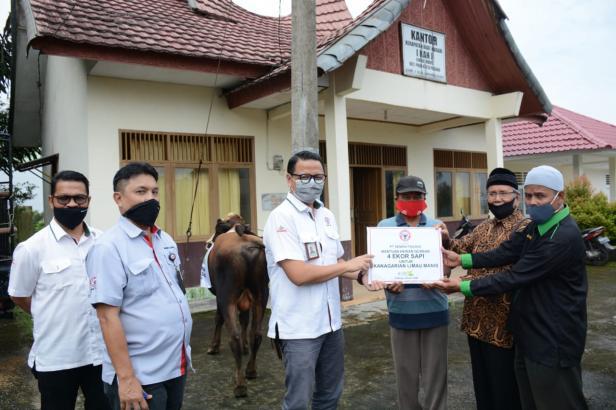 Kepala Unit CSR Semen Padang Muhamad Ikrar (kanan) didampingi staf CSR Masykur Rauf dan Delfi Adri, menyerahkan bantuan 4 ekor sapi kurban secara simbolis kepada Ketua KAN Limau Manis Syarifuddin Dt Bungsu.
