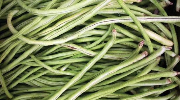 Kacang pajang satu darj banyak jenis tanaman palawija yang bisa panen selama kisaran 45 hari