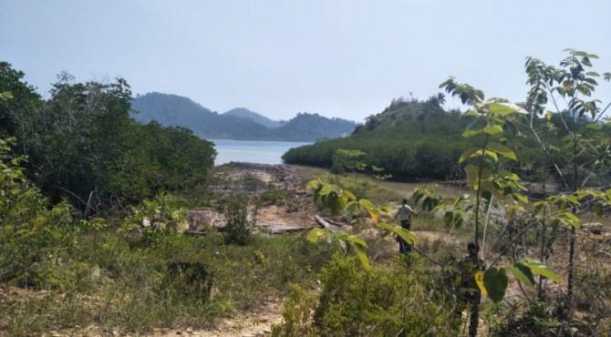 Kondisi mangrove pada lahan yang diduga rusak sudah tumbuh kembali